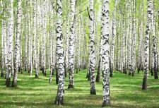 White Birch Woods Photo Backdrops Studio Photography Background Vinyl 8x6Ft