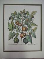 "Vintage Tomatoes & Melons ""Hortus Eystettensis"" Basil Besler Etching Print"