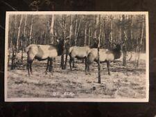 Mint Canada RPPC Postcard Byron Harmon Photo LG5 Elk