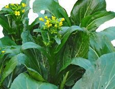 Chinese Cabbage CHOY SUM Hong Kong Greens 150 seeds asian greens