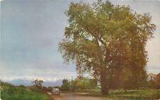 1940s Tulare California Charter Oak Visalia Roberts postcard 11818
