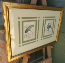 Framed Pair of Antique Edward Lear Hand-Coloured Parrot Engravings Birds