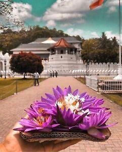 Dalada maligawa (Sri Lankan Photos) free shipping