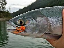 Fly Fishing Flies (Steelhead, Salmon, Trout, Shad, Bass) Morning Star Fly (6)