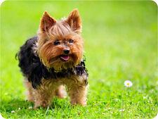 Mauspad Edition Colibri: Yorkshire Terrier - klein und knuffelig