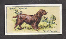 1936 Uk Dog Art Body Portrait Ogden's Cigarette Card English Field Spaniel