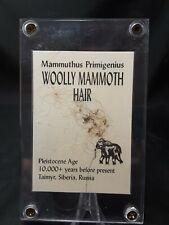 "Mammoth Hair in 3"" X 5"" plexiglass case. Display ready with info card"
