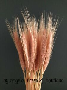 30 STEMS DRIED WHEAT/RYE BUNCH FLOWERS ARRANGING READY TO USE  PINK