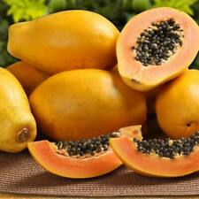 30Pcs Papaya Fruit Seeds Exotic 2 Kind Bonsai Fast Germination in Your Garden