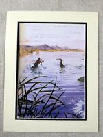 Walton Ford Stampa Coccodrillo Lago Landscape Naturalista Animali Illustrazioni