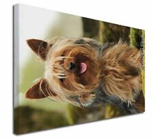 More details for yorkshire terrier 'love you dad' x-large 30