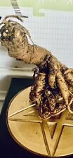 More details for mandrake | mandragora (med/large) 'oh thy phallic guy' whole root. alter. wiccan