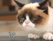 Grumpy Cat - Joy - Fridge Magnet