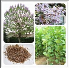 Paulownia Royal Empress 100 Pcs Seeds Tree Tomentosa Plants Flowers Garden New N
