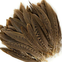 """ENGLISH RINGNECK PHEASANT Natural Feathers 6-8"""" Halloween/Hats/Costume"""