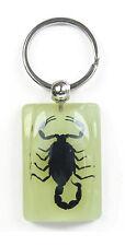 Glow In The Dark Lucite Lucky Charm Keychain w/ GENUINE Black Scorpion YK5991