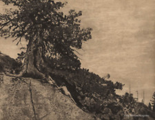 "Anne Brigman photo, ""Dryad"" 1933"