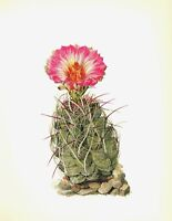 Antique Cactus Print Botanical Print Straw Spine Cactus Gallery Wall Art  #2797