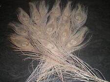 lot de 10 plumes magnifique paon blanc