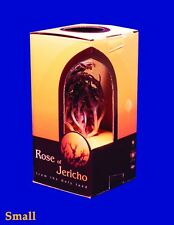 Real Rose of Jericho. The Resurrection plant from the Holly Land USA Seller!!