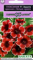 "Gloxinia ""Avanti F1 Scarlet with a white edge"" Japanese High Quality"