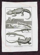 Jewelled Lacerta-Salamander-Agama Lizards1789 Copper Plate Engraving