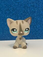 Authentic Gray Shorthair Cat #468/792