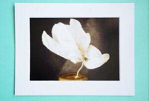 Photo Art Print VanagART New A5 Format Framed Cardboard Vintage Still Life Flowe
