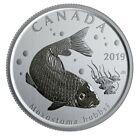 Canada 50 cents coin, Wildlife Treasury Fish Uncirculated 2019