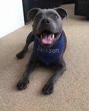 PERSONALISED PUPPY OR SMALL DOG BANDANA  BLUE OR FUSHIA PINK DIAMANTE EFFECT