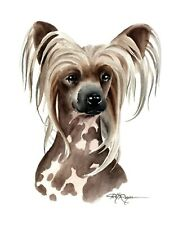 Chinese Crested Dog Watercolor 11 x 14 Large Art Print by Artist Dj Rogers