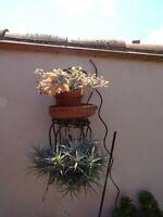 lot =de plantes ,aériennes et plante grasse