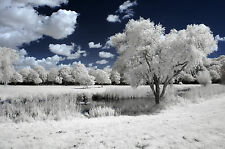 Nikon D50 Infrared Conversion Service. Infrared 690nm. Infrared photography IR.