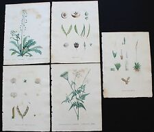 1805 -  LOT of 5 REDOUTE Color Stipple Engravings Finished by Hand