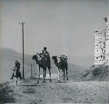 SYRIE c. 1960 - Enfants Âne et Chameaux Krak des Chevaliers  - Div 11452
