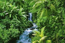 RAINFOREST - SCENIC POSTER 24x36 - NATURE 1400