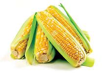 3g. (approx. 25) sweet corn seeds ZLOTA Best for a popcorn making Superior taste