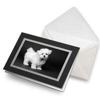 Maltese Dog Birthday Personalised Greeting Card FV194 Mum Dad Wife