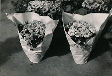 Photo Emmanuel Sougez fleurs tirage argentique époque v. 1950 tampon