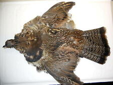 Partridge Skin, Feathers, Beautiful colors , Select