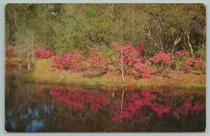 Waycross Georgia~Okefenokee Swamp Park~Vintage Postcard