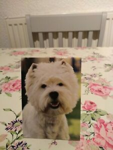 West Highland Terrier Note Pad