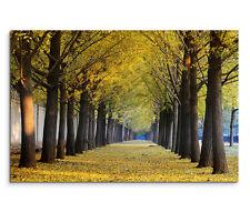 120x80cm Leinwandbild auf Keilrahmen Allee Gingkobäume im Herbst Natur
