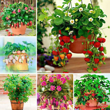 1000 Pcs Seeds Strawberry Bonsai Tree Plants Perennial Fruits Garden Decoration