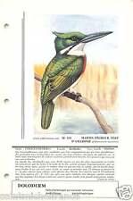 Martin-pêcheur d'Amazonie Chloroceryle amazona Amazon Kingfisher FICHE CARD 50s