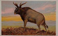 c1900 TEDESCA STAMPA SIVATHERIUM PREISTORICO ANIMALE DINOSAURO der Urwelt