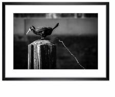 Wandbild - Der Kackvogel in Aktion (Kormoran) - Holzrahmen - 75x55cm - ART