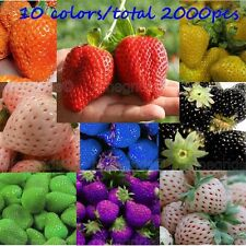 Sweet Strawberry Seeds Black BLue Red Pink White Everbearing Fruit Plant 2000PCS