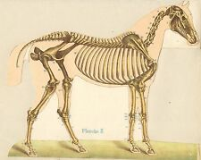 ☆ VETERINARY BOOKS ☆ Big Vet Book Collection Scanned to a DVD-Rom or Download ☆