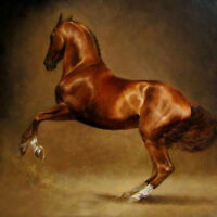 LMOP17 100% hand-painted modern abstract horse oil painting decor art on canvas
